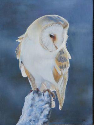 Barn Owl by Kellie Bremner