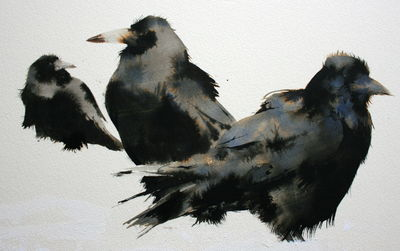 Rooks in the Snow by Artist Kate Osborne