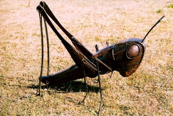 Grasshopper by Alan Williams