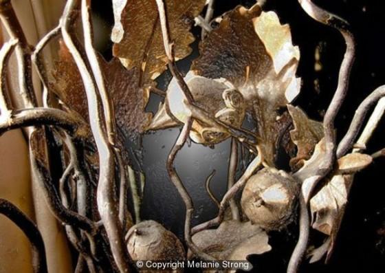 Acorn-Leaves by Melanie Strong