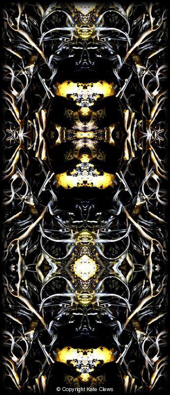 Seaweed reflected 10 by Kate Clews