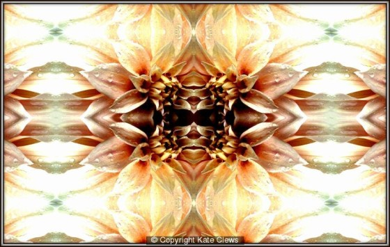 345501_face-in-petals