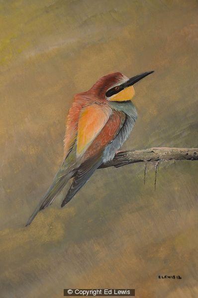 European Bee-eater by Ed Lewis