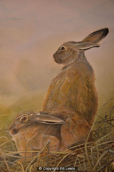 European Hare by Ed Lewis