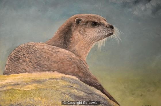Eurasian Otter by Ed Lewis